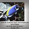 God, Our Creator And Savior