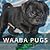 Waaba-Pugs puppy breeder :: Waaba-Pugs Review