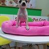 Sieupet.com-Mua bán thú cưng uy tín trên toàn quốc