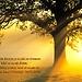 S duchovním životem je to jako se stromem
